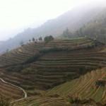 Reis-Terrassen bei Pingan