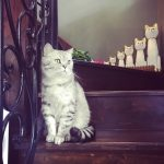 Katzen-Cafés im Jingan-Viertel (2)